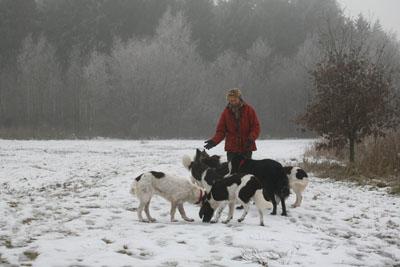 honden in de sneeuw in Kuinderbos