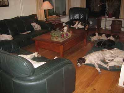 honden in woonkamer